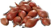 Agrobazaar Kıska Soğan 1 Kg Arpacık Soğan Iska Soğan Tohumu