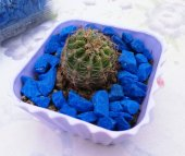 Mavi Taşlı 10x10cm Mor Saksılı Radyasyon Emici Çiçek Açan Dikenli Eliptik Vitaminli Topraklı Kaktüs
