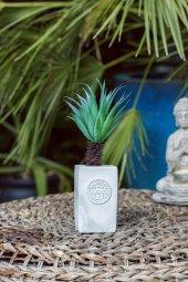 California Palm Beton Saksılı Çiçek