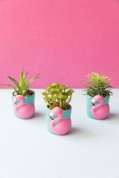 3lü Flamingolu Sukulent Vazo (3)