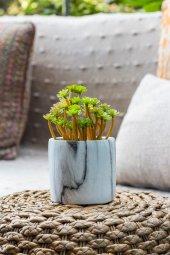Mermer Saksılı İtalyan İlkbahar Yeşili Kaktüslü Vazo
