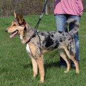 Trixie Köpek Yürüme Eğitim Tasması M33 47cm...