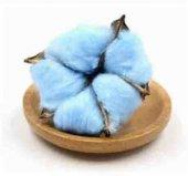 Pamuk Kozası Mavi 10 Dal