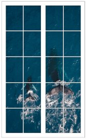 Pencere, Balina Duvar Sticker