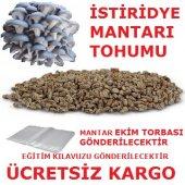 Kavak Mantarı Tohumu + Mantar Ekim Poşeti +...