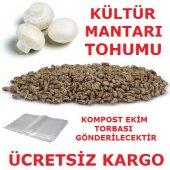 Kültür Mantarı Tohumu + Mantar Kompostu Sarım...