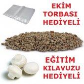 Kültür Mantarı Tohumu + Ekim Poşeti + Eğitim...
