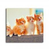 Kedi Yavruları Tablo