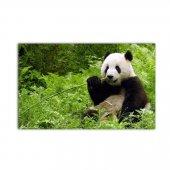 Yaramaz Panda Ekotablo