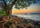 161 Doğa, Deniz Kenarı, Ağaç
