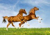 156 Doğa Atlar