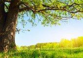 155 Doğa Ağaç Altı