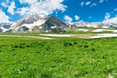 151 Doğa Dağ Etekleri