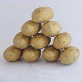 Maket Patates