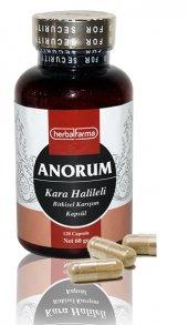 Anorum