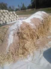 3 Torba İstiridye Mantar Kompostu (Kuru, Hazır,...