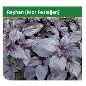 Fide Sepeti Reyhan Tohumu 5grlık 1 Paket
