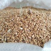 Buğday Tavuk Güvercin Kaz Ördek İçin 3kg
