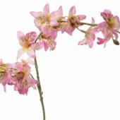 Pembe Dallı Çiçek