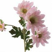 Papatya Pembe Dallı Çiçek