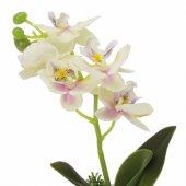 Saksıda Orkide Çiçek Beyaz Mor