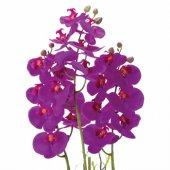 3 Dallı Fuşya Orkide Saksılı Çiçek