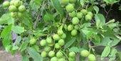 Ekobigsol %100 Organik Solucan Gübresi 10 Kg Lamineli Çuval-3