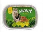 Sweet Kedi Çimi