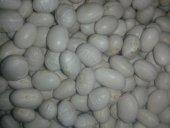 Erzurum Yöresel Gıda İspir Şeker Fasulyesi 1 Kg
