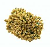 Cipso Çiçek Altın Pk 144 Adet