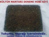 özel Kutusunda Kültür Mantarı Tohumu Ekili...
