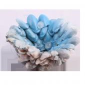 Tantrona Antep Fıstık Kabuklarından Deniz Dalgası Mumluk