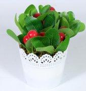 Yuvarlak Dantelli Saksıda Yapay Vişne Çiçeği 15 Cm Koyu Kırmızı