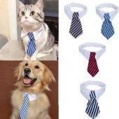 Kedi Köpek Boyun Tasması Kravat Tasarımlı Kedi...