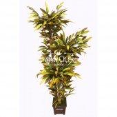 Yapay Mango Ağacı 170 Cm