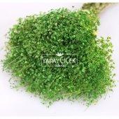 Kuru Çiçek Cipso Demeti Yeşil-3