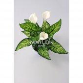 Galalı Yapay Geniş Yapraklı Salon ve Balkon Çiçeği Tanzimi-2