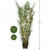 Bambu Ağacı 6 Gövde 180 Cm(1.sınıf Yaprak)...