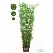 Yapay Bambu Ağacı 10 Gövde 180 Cm