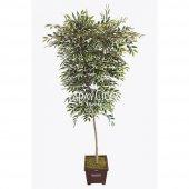 Starlight Benjamin Ağaç Saksılı 180 Cm
