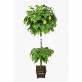 Yapay Ağaç Limon Ağacı 180 Cm