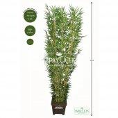 Bambu Ağacı 10 Gövde 180 Cm(1.sınıf Yaprak)
