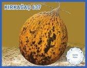 Biogen Kırkağaç 637 Kavun Tohumu 25gr 1 Paket