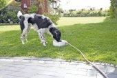 Trixie Köpek Kedi Suluğu, 1,5lt 24 X 10 X 23cm