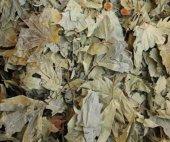 çınar Yaprağı 250 Gr Yeni