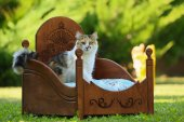 �mandu Ahşap Lüks Kedi Yatağı