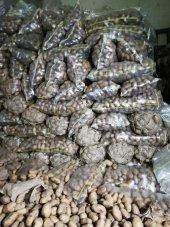 Afyon Patatesi Sarı Kışlık Patates Agiria Cinsi...