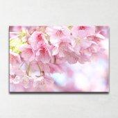 Kiraz Çiçeği Kanvas Tablo