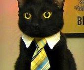 Kedi Köpek Boyun Tasması Kravat Şeklinde