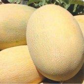 Kavun Tohumu Hibrit A Z 90 F1 Ananas Tipi 20 Adet Tohumluk
